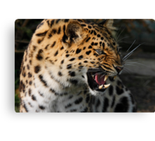 Angry Leopard Canvas Print