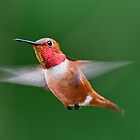 Yes one more Humming Bird by j Kirk Photography                      Kirk Friederich