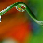 butterfly bubbles by Ruby  Pen