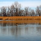 Presque Isle Pond by Kathy Weaver