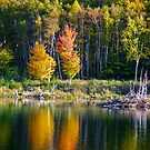 Autumn Reflections by Friendly Photog