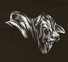 Brahman Bull by Lyrebird