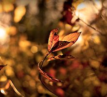 Leaves in the Wind by believer9