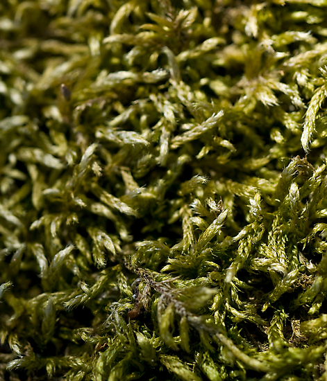 knitted moss by jude walton