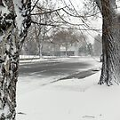 Snow Day  by Anita Schuler