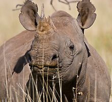Black Rhino at Lewa by David Clarke