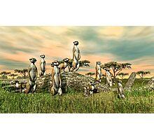 Meerkats Photographic Print