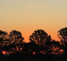 Tree wind break silouetted against sunset  Linthorpe Park, Yarrawonga by David Hunt