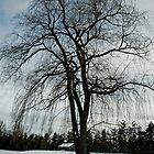 Tree in Blue by RBFoto