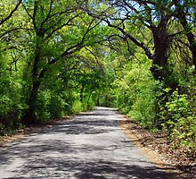 Country Road - Arched Trees by plsphoto