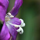Wonder of nature. by imagic