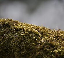 Moss in the Haze by TheKoopaBros