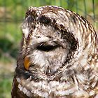 Barred Owl by Dave & Trena Puckett