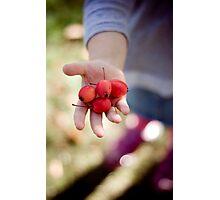picking crabapples Photographic Print