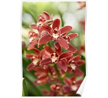 Orchid Red Poster