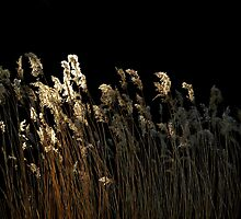 Tall Grass by Stan Wojtaszek