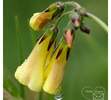 Tears from Heaven by Tepara