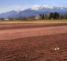 Cranberry Fields by PrairieRose