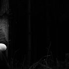 black woods. by westmajo