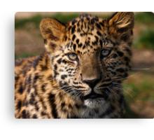 Amur Leopard cub Canvas Print