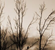 Sunset Watcher In Sepia by Waleska Luker
