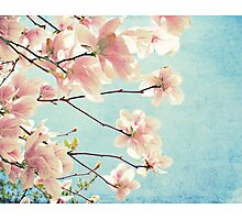 Cotton Candy Spring Photographic Print