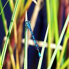 Damselfly by Angela Yoldassis