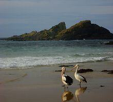 Pelicans at Seal Rocks, NSW, Australia  by Of Land & Ocean - Samantha Goode