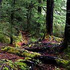 Autumn Paths by Linda Cutche