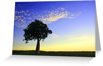 Boab at Sunrise by Sheldon Pettit