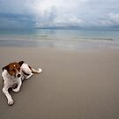 Dog On The Beach by Bobby McLeod