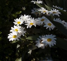 daisy delight by cherylc1