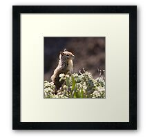 Ground Squirrel with Wild Flowers Framed Print
