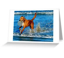 Dog, Frisbee and the beach and the waves of the OCEAN Greeting Card