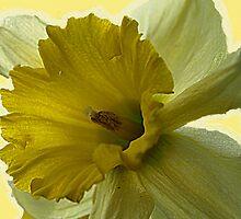 It's  Yellow by kimbarose
