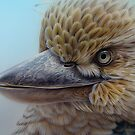 Blue-winged Kookaburra by Christopher Pope