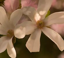 Magnolia Flowers by sundawg7