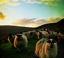 Sundown Achill by Polly x