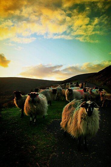 Sundown Achill by Polly x