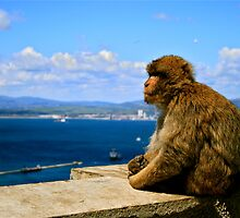 Macaque by hwoomarn