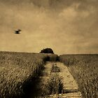 DreamLand and Bird. by Antonio Arcos aka fotonstudio