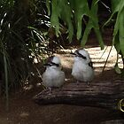 Awesome Kookaburras by Calliope-Oz