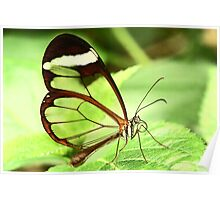 Transparent Butterfly Poster