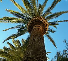 Palm Tree in the Vegas Sky  {short girls prostective} by Diane Trummer Sullivan