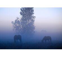 Broodmares, Blue mist Photographic Print