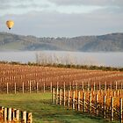 Ballooning over the Yarra Valley by Donna Vanderspek