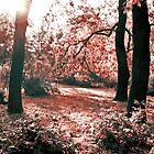 Redwood by 4u64ica