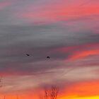 A Beautiful Flight by Curtis Ventresca