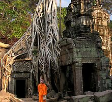 STRANGLER FIG - CAMBODIA by Michael Sheridan
