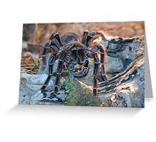 Bird-eating Spider Greeting Card